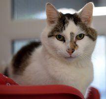 Warrington Animal Welfare Reggie Cat Adoption Animals Cats
