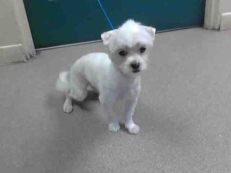 Gayweho Dogs 4 U On Dogs Adoption Small Dogs