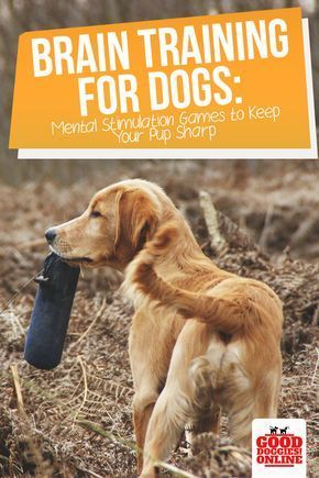 Brain Training For Dogs Dog Training Dog Clicker Training Dog