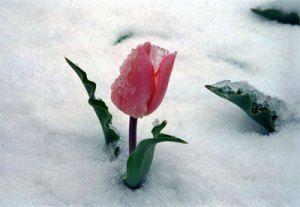 صور عن الشتاء احلي صور خلفيات لفصل الشتاء جديد Plants Planting Flowers Pretty Flowers
