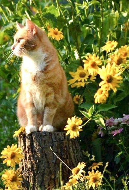 Yellow Summer Cottage Beautiful Cats Tabby Cat Kittens