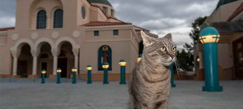 For Natural Pest Control Adopt Working Cats The Animal Foundation In 2020 Cats Natural Pest Control Animals