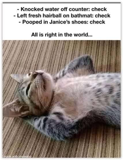 Pin By Janice G On Cat Lady Cats Sleeping Funny Why Do Cats Purr Cat Sleeping