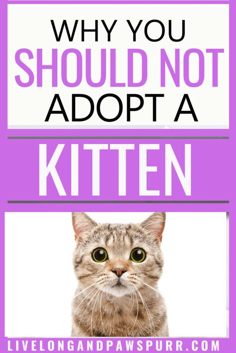 Why You Should Not Get A Cat In 2020 Kitten Adoption Cat Advice Kitten Care