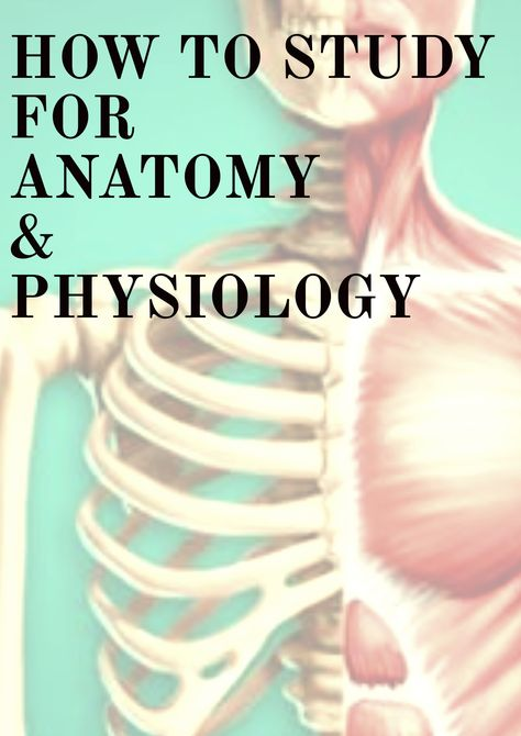 How To Study Anatomy and Physiology