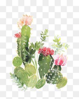 Cactus Flower Painting Cactus Flower Painting Succulents Wallpaper Cactus Illustration