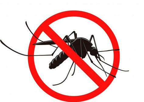 Pin By Hurghada Excursions On Home Services In 2021 Mosquito Control Darth Fictional Characters
