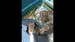 What To Feed Baby Rabbits 2 3 Weeks Old Orphaned Baby Bunnies In 2020 Rabbit Feeding Wild Bunny Baby Feeding