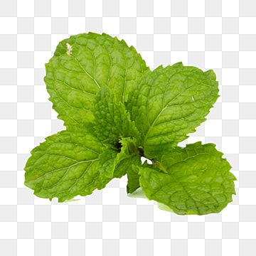 Fresh Green Mint Leaf Isolated On Transparent Leaf Clipart Green Freshness Png Transparent Clipart Image And Psd File For Free Download In 2021 Leaf Clipart Plant Leaves Mint Leaves