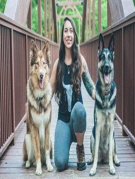 Lehigh Valley Dog Training Dog Training Dogs Aggressive Dog