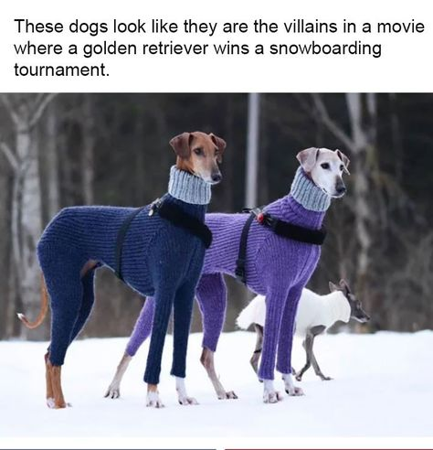 These Dogs in Matching Turtlenecks Inspired Funny Jokes That Are All Too Real - Dank Doodle Memes - Chien Cute Funny Animals, Funny Animal Pictures, Funny Cute, Funny Dogs, Super Funny, Funny Photos, Memes Humor, Dog Funnies, Humour Quotes
