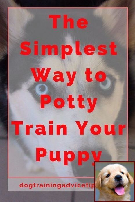House Training Puppy Crate Video And Clicker Dog Training