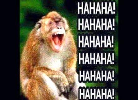 Gambar Monyet Lucu 4 Lucu Gambar Meme Lucu
