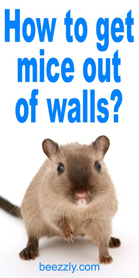 Mice Can Make A Serious Disaster In A House Which Will Threaten