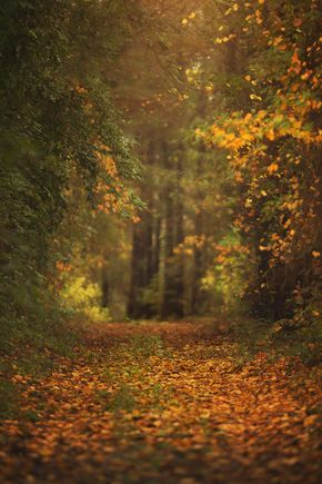 Kcc Fall Autumn Digital Background With Images Digital