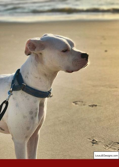 The Dog Whisperer Tips For Training A Puppy And Pics Of Best Way
