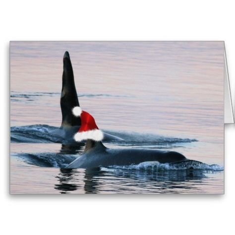Funny Holiday Cards with orca Whales