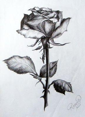 Dibujos De Amor Hermosos Dibujos De Rosas Flores Dibujadas A Lapiz Dibujos