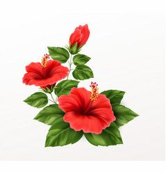 Beautiful Hibiscus Flower Buds And Leaves Vector In 2020 Vector Flowers Hibiscus Flowers Heliconia Flower