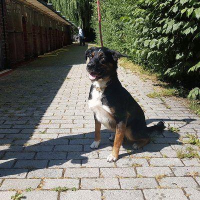 Tierheim Osnabruck Tierheim Tiere Hunde