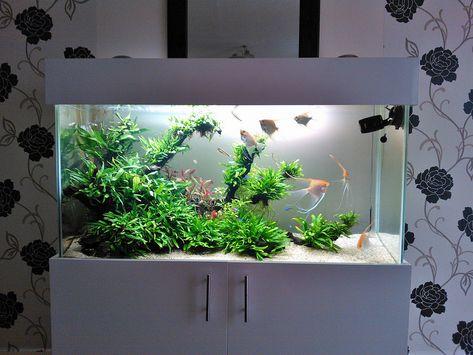 Angelfish Planted Aquarium Acuario Tropical Acuario