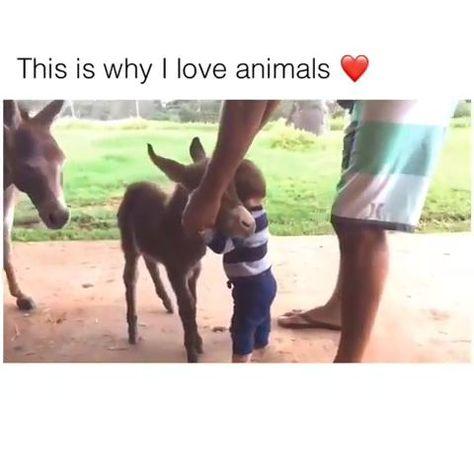 (notitle) - Cute animals - #Animals #Cute #notitle
