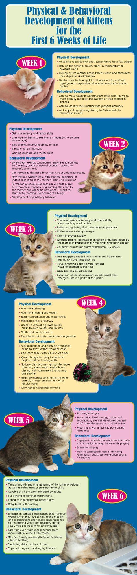 feed a newborn kitten newborn kittens and cat