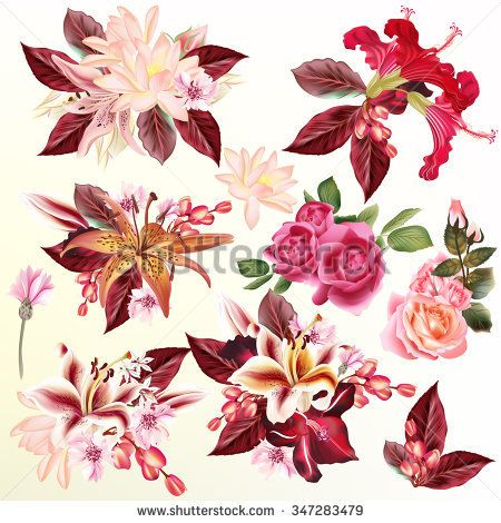 Collection Or Set Or Realistic Vector Flowers Lily Roses Lotus Hibiscus For Design Vector Flowers Free Vector Images Vector Free