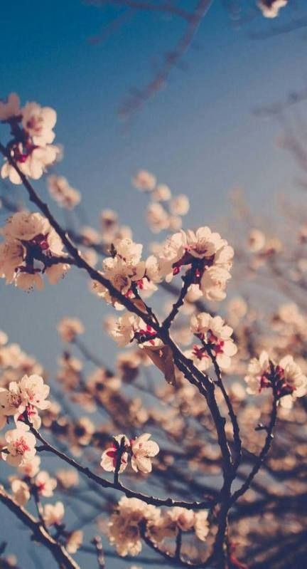 Flowers Tumblr Background Cherry Blossoms 49 Ideas Spring Wallpaper Nature Wallpaper Pink Wallpaper Iphone