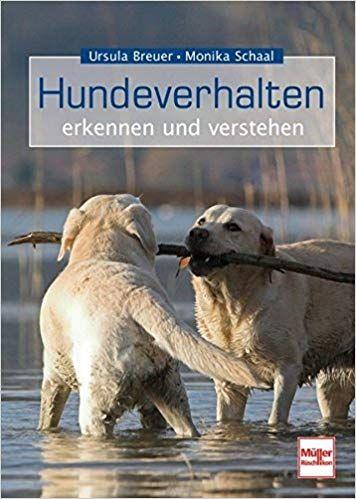Hundeverhalten Erkennen Und Verstehen Hunde Hundespielzeug