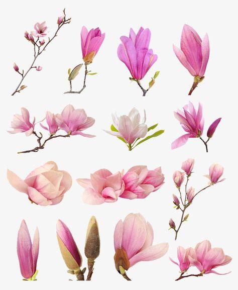 꽃 명작집,봉오리,꽃,핑크