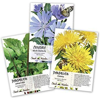 Seed Needs Dandelion Seed Collection 3 Individual Packets Non Gmo Dandelion Seed Seeds Dandelion Plant