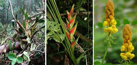 Tropical Rainforest Plants Amazon Rainforest Plants Amazon