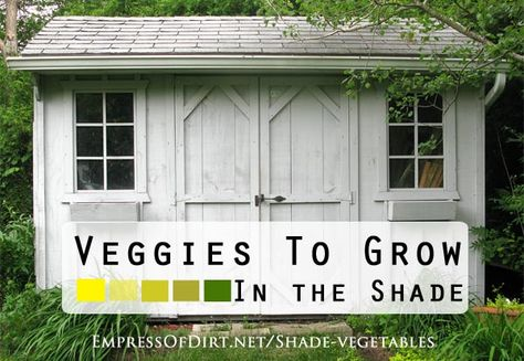 Veggies to grow in the shade at empressofdirt.net... Lots of options including broccoli, spinach, kale, carrots, and more!
