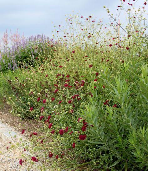 växter som tål torka
