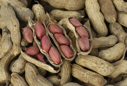 Growing peanuts at home (If you are having problems with your soil, growing peanuts is a great way to revitalize the soil, and you get peanuts).