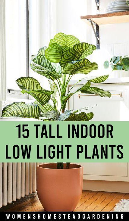 15 Tall Indoor Low Light Plants Tall Indoor Plants Indoor Plants Low Light Low Light House Plants