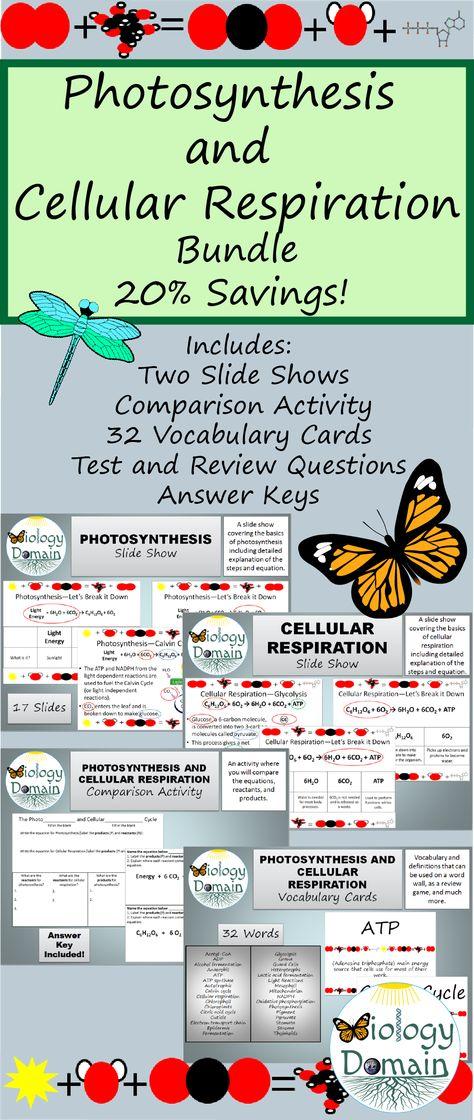 Photosynthesis and Cellular Respiration Bundle