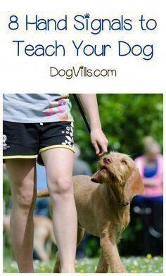 Excellent Volunteered Best Dog Training Tricks Look Here Dog