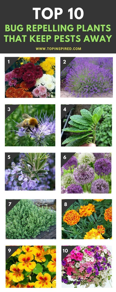 Top 10 Bug Repelling Flowers That Keep Pests Out Of Your Garden