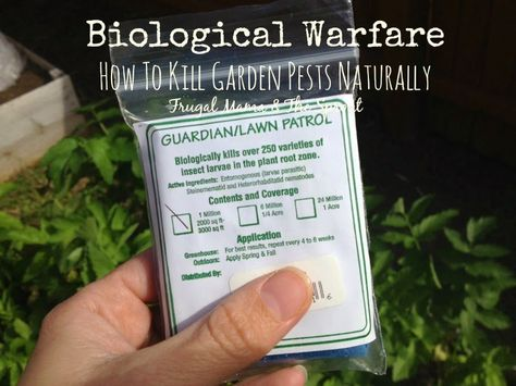 How To Use Beneficial Nematodes To Kill All Kinds Of Garden And Yard Pests From Fleas And Ticks To Grubs And Termites Garden Pests Organic Lawn