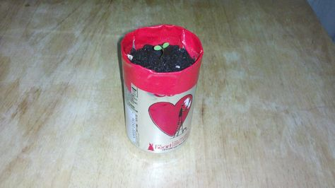 For Daisy Flower Garden Journey-Recycled pots (soda can pot pictured)