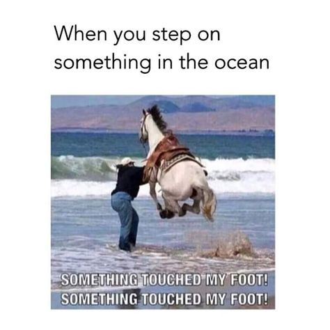 Animals - Horses Funny - Funny Horse Meme - - More like someone stole my dad's picture Yeah. My dad took this pic while we were at Morro Bay The post Animals appeared first on Gag Dad. Funny Horse Memes, Funny Horse Pictures, Funny Animal Jokes, Funny Horses, Crazy Funny Memes, Really Funny Memes, Cute Funny Animals, Stupid Memes, Funny Relatable Memes