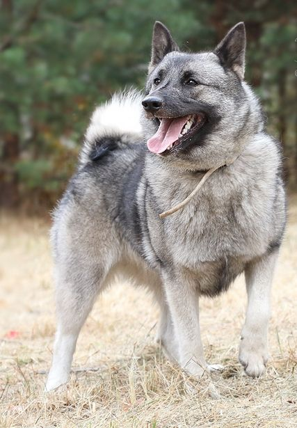 The 80 Most Popular Viking Dog Names Petpress In 2020 Dog Names Dogs Norse Names