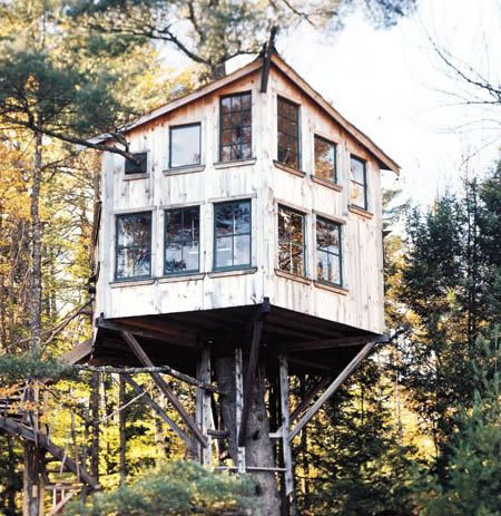 Peter Lewis's Tree house