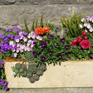 Como Combinar Varias Plantas En Una Maceta Container Gardening Flowers Container Flowers Container Gardening