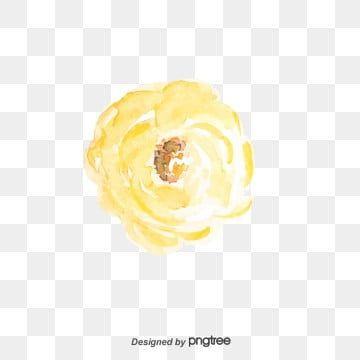 وردة بيضاء وردة بيضاء زهور أبيض Png وملف Psd للتحميل مجانا White Roses Rose Fruit