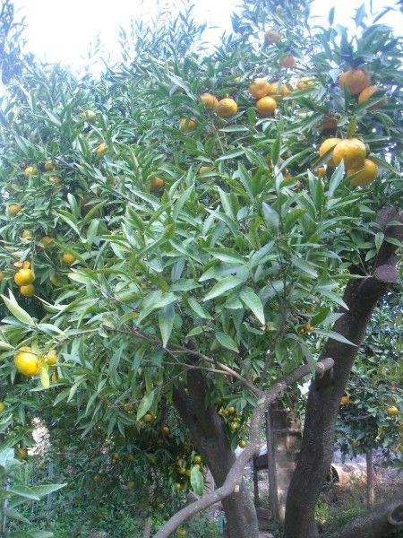 Potatura Alberi Da Frutta Calendario Alberi Da Giardino Orto In