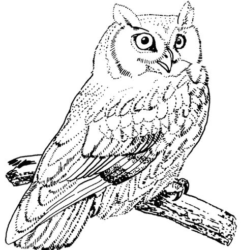 Great Horned Owl Coloring Pages Coloring Animals Pinterest