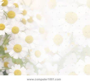 Gambar Bunga Putih Simple 36 Template Powerpoint Dengan Tema Bunga Computer 1001 Download Cara Membuat Bunga Dari Plastik Desain Bunga Bunga Bunga Putih